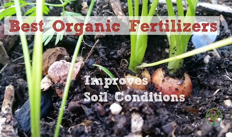 best organic fertilizer