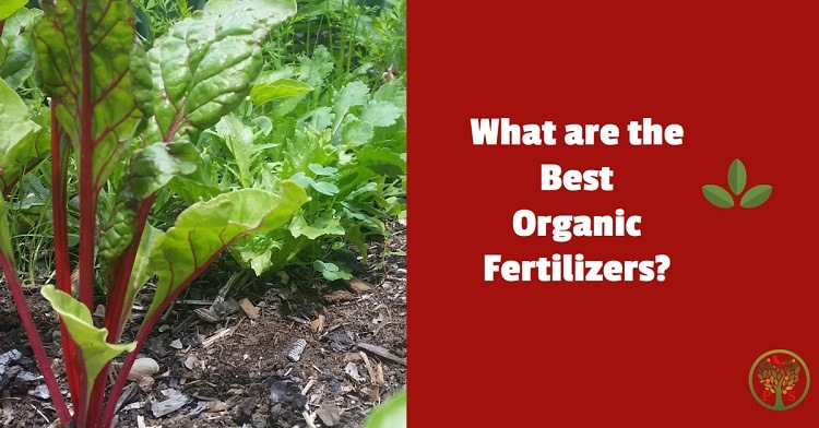 best organic fertilizers