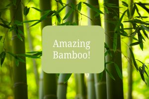 About Bamboo
